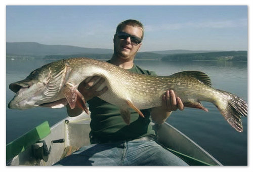 Рыбалка на Маховом озере: смотрите, какого поймал — жаль, что придётся отпустить.