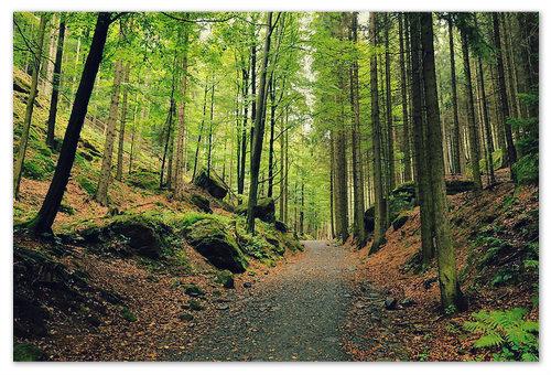 Уютные тропы для пеших прогулок.