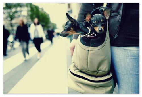 Собачка ухоженная — это когда она сыта и ей тепло.