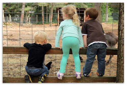Дети у вольеры