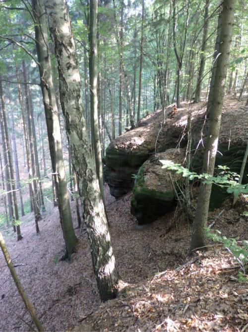 В буковом лесу.