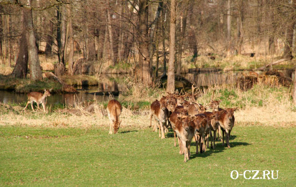 Обитатели парка.