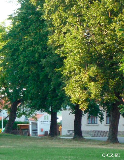 Огромные деревья.