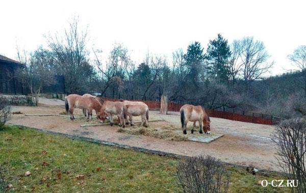 Лошади в зоопарке.