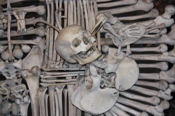Экспозиция из костей.