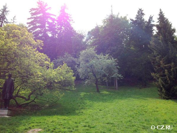 Деревья в парке.