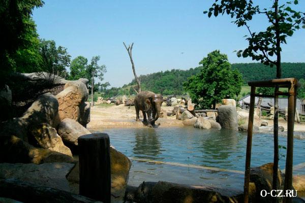 Слон в зоопарке.