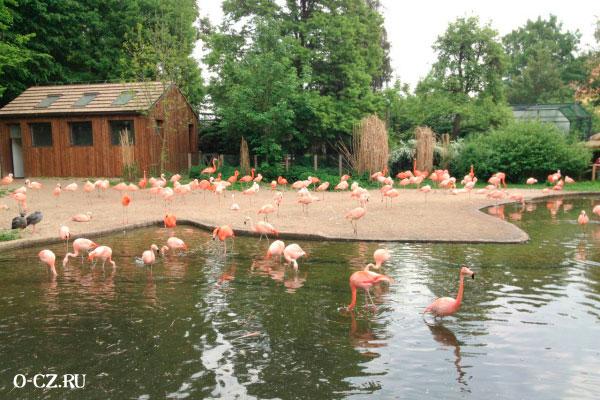 Розовые фламинго.