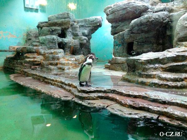 Пингвин в зоопарке.