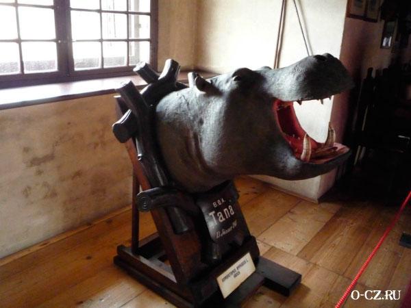 Голова бегемота.